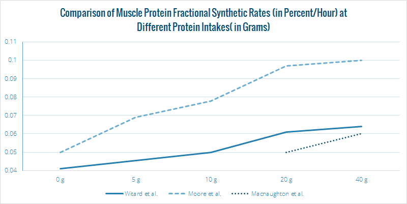 Muscle Protein Synthesis Graph
