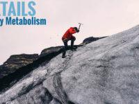 An In-Depth Look at Energy Metabolism: Part III